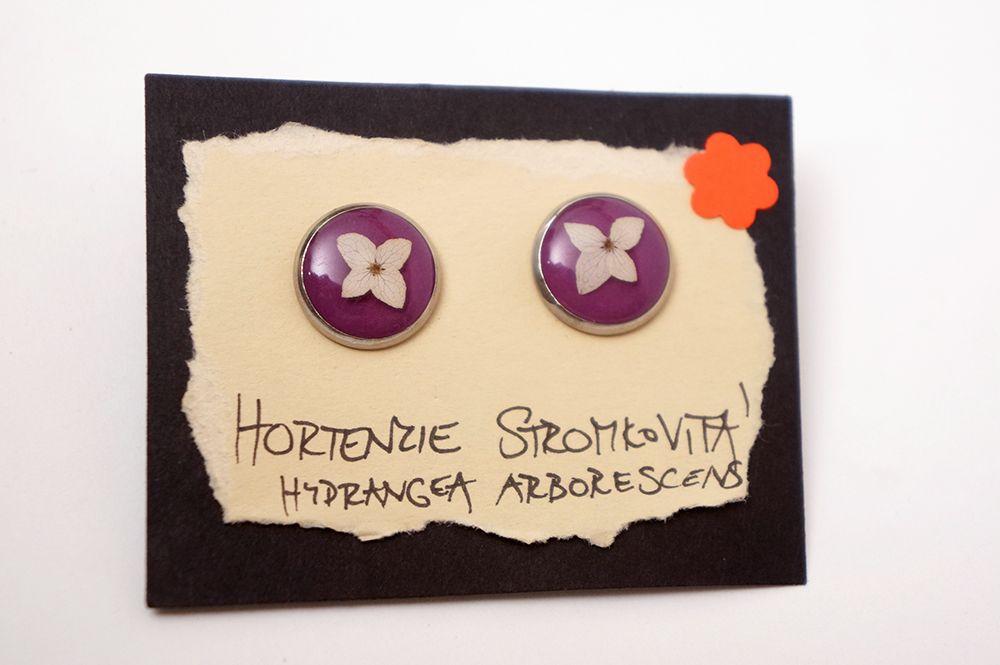 Náušnice Ančičák - hortenzie stromkovitá